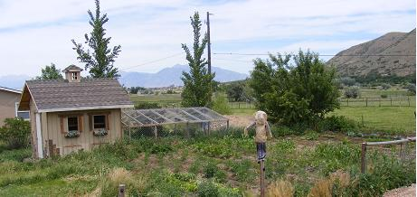 View of the garden, chicken coop and scarecrow.